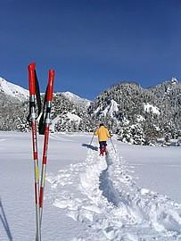 Ski nordique dans la poudreuse