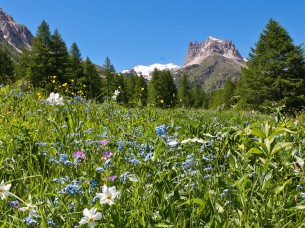 Séjour randonnées sportives : Le Mont Thabor